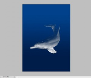 The Making of the Liquid Dolphin